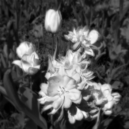 Blommor B & W Infrared foto